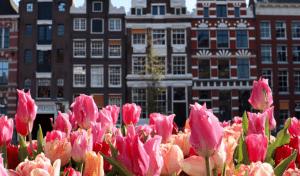 Tulipas em Amsterdam